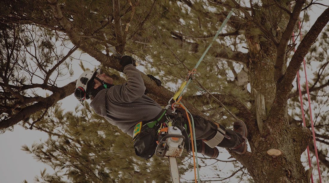 Champion Tree Trimming Service, LLC: Emergency tree removal in Kalispell  , Whitefish and Bigfork