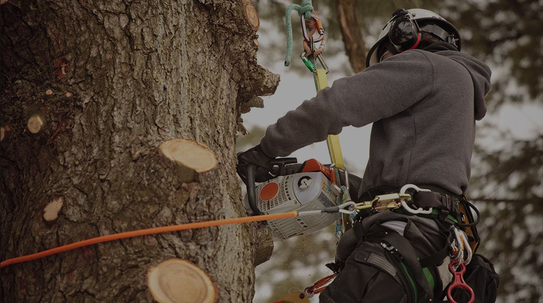 Champion Tree Trimming Service, LLC: Stump and tree removal in Kalispell, Whitefish and Bigfork