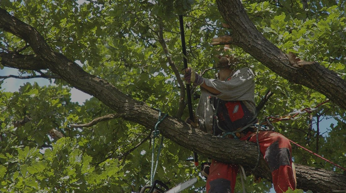 Champion Tree Trimming Service, LLC: Tree cabling and bracing in Kalispell, Whitefish and Bigfork