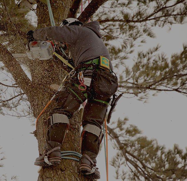 Champion Tree Trimming Service, LLC: Tree health in Kalispell, Whitefish and Bigfork