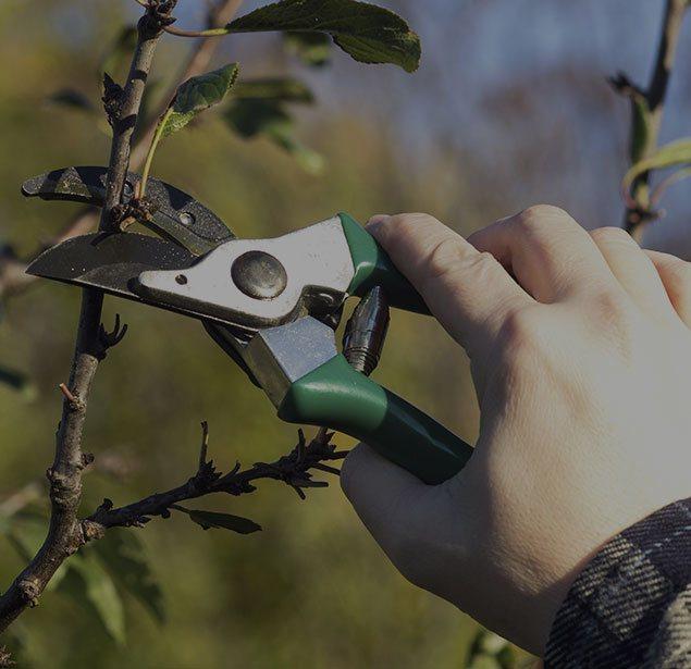 Champion Tree Trimming Service, LLC: Tree pruning in Kalispell, Whitefish and Bigfork