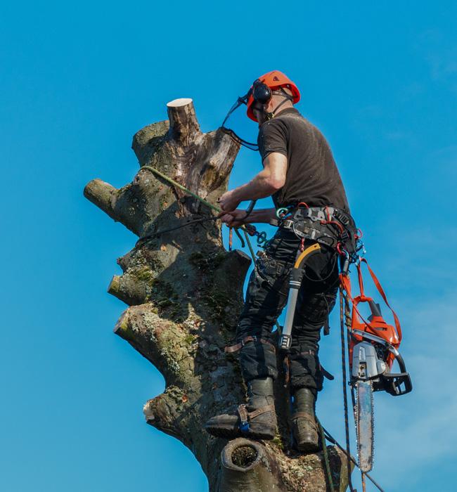 Champion Tree Trimming Service, LLC Arborist Services